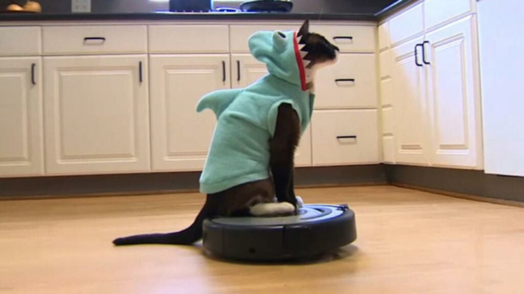 Cats riding Roomba will never stop being funny